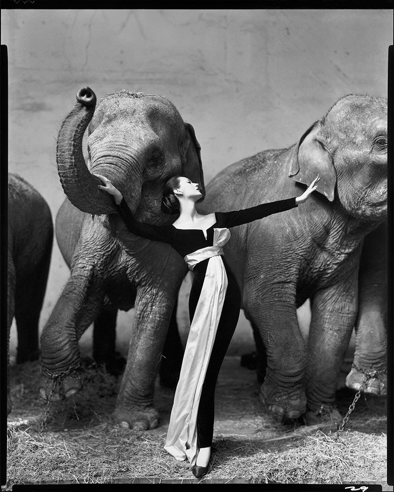 Dovima with elephants evening dress by Dior Cirque dHiver Paris August 1955 Richard Avedon 1955